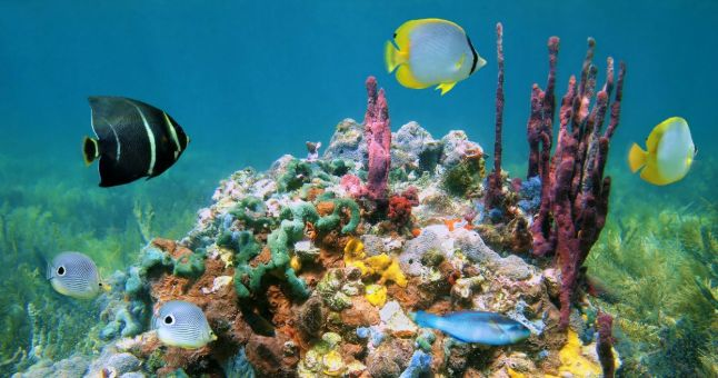 coral and exotic sea life underwater