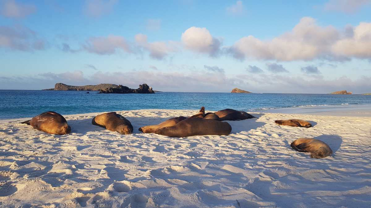 seals on a beach at sunset