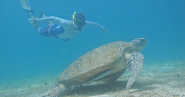 turtle and person swimming together