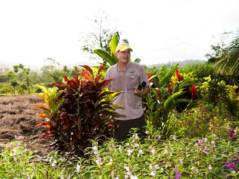 Local guide standing with plants