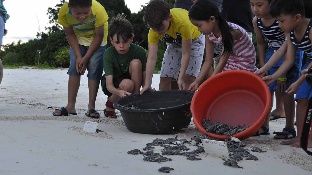 turtles being released in borneo