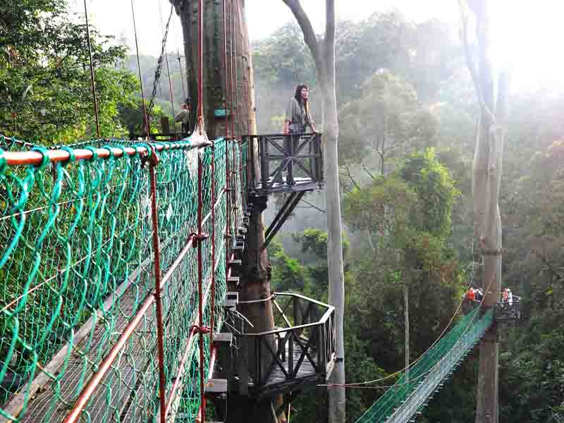 woman on viewing platform at Danum Valley reserve