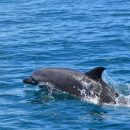 dolphin in costa ballena