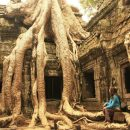 Cambodia Angkor Watt Temple Tree