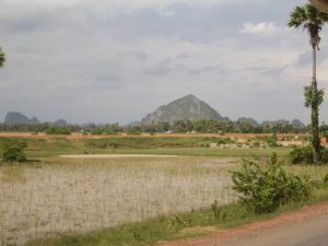 Cambodia Kampot bike rice fields