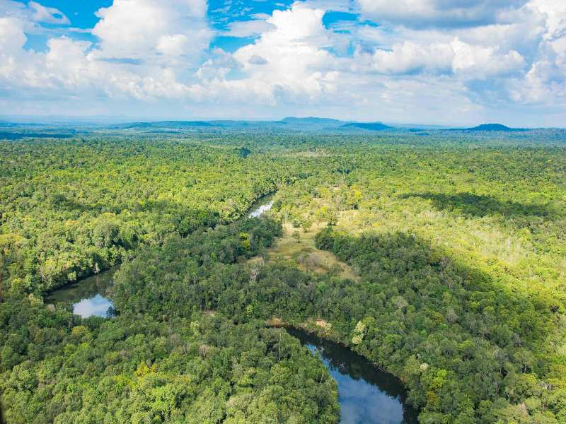 Cardamom Mountains Jungle