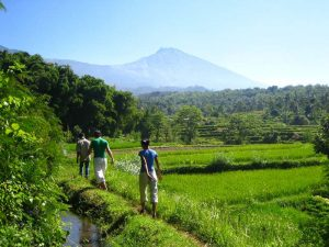 Tetebatu Hiking Lombok Indonesia Rice Fields