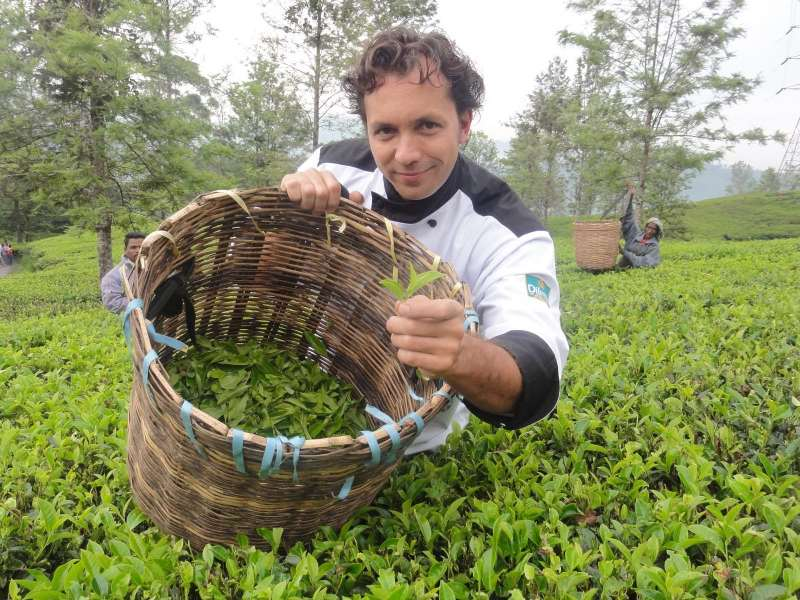 a man in tea fields with a basked