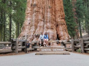 couple sitting in front of general sherman tree