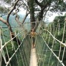 person on canopy walk