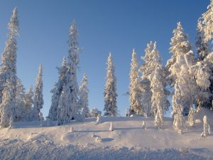 snowy trees on a hill
