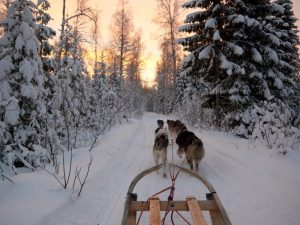 huskies pull a sleigh with the sun setting
