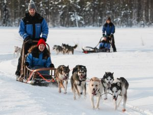huskies pull a sled through the snow