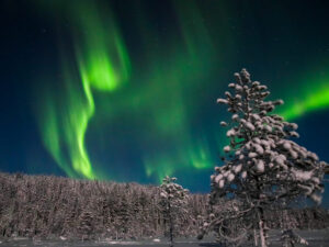 green northern lights over the treetops