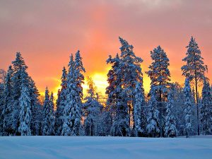 the sun sets behind some snowy laden trees